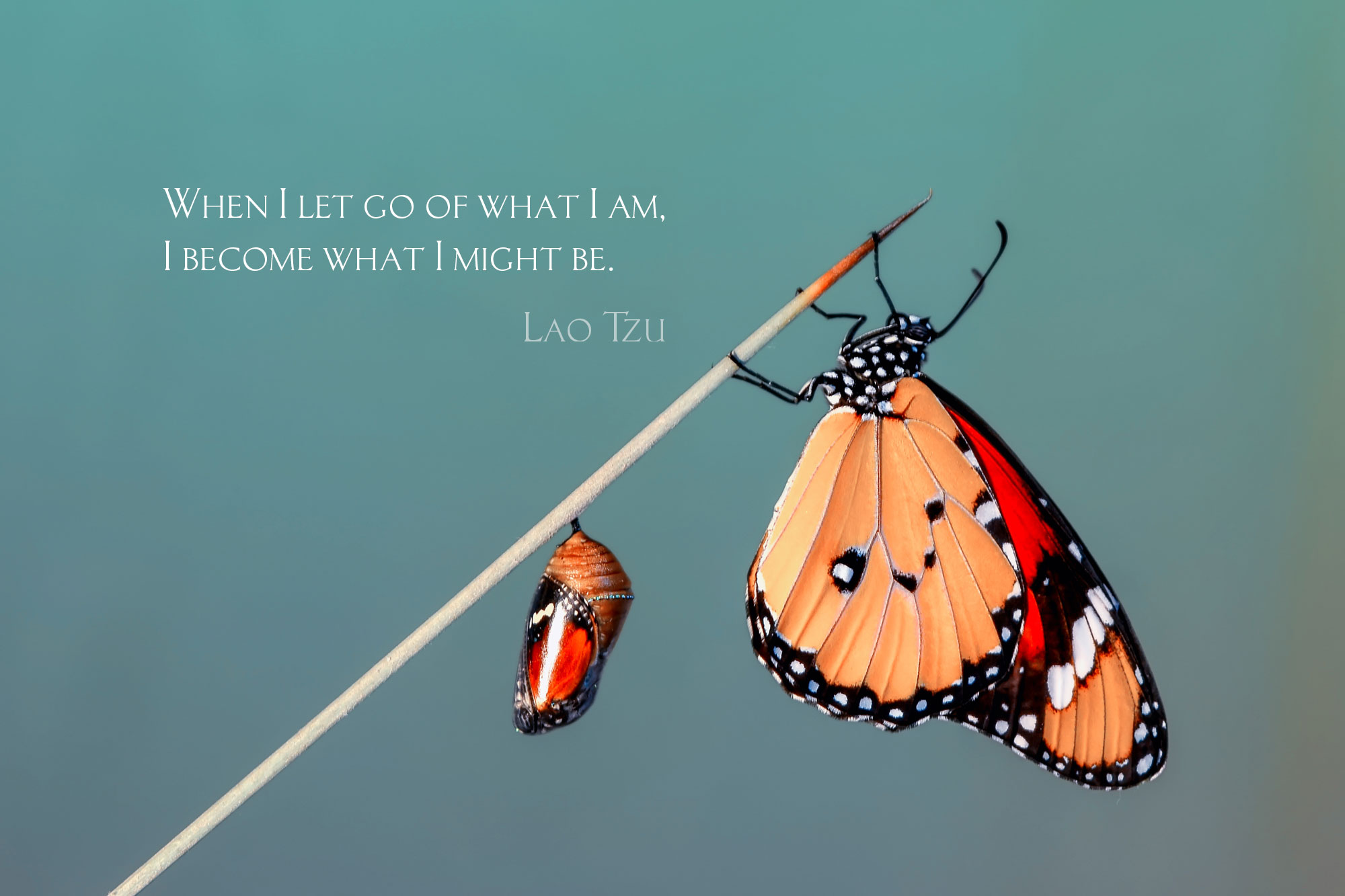 The Alchemy of Transformation Begins with Letting Go