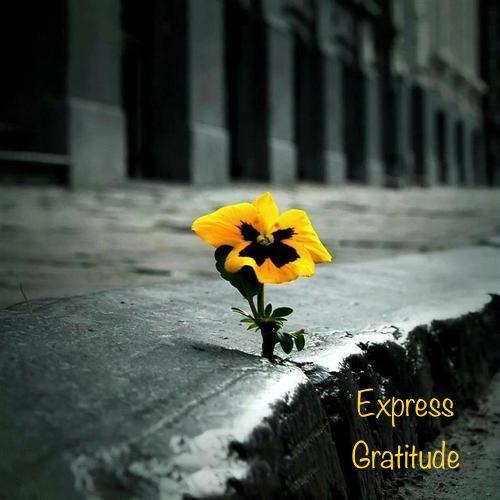 Energy Medicine Monday – Practice Gratitude